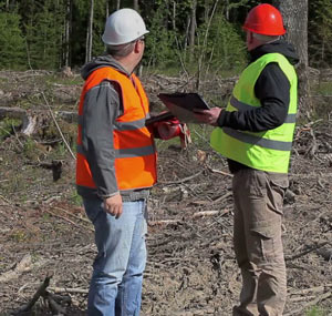 Tree Surgeon Cork Consultancy